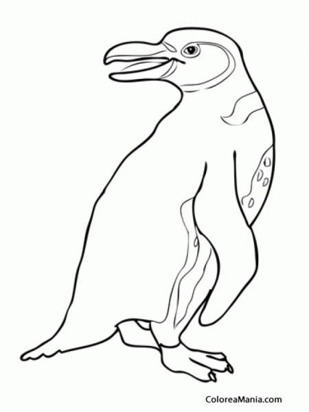 Colorear Pingüino De Las Islas Galápagos (animales Polares