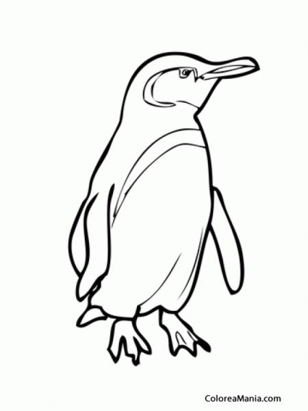Colorear Pingüino Galápagos (animales Polares), Dibujo Para