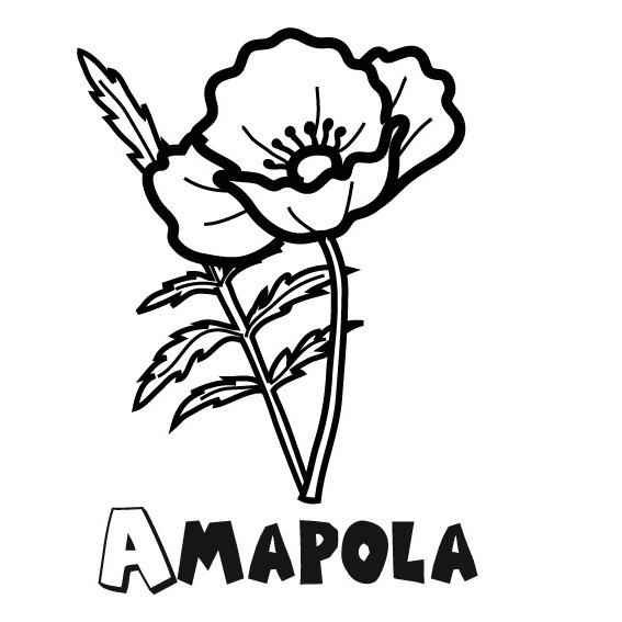 Dibujos De Amapolas Para Colorear, Pintar E Imprimir
