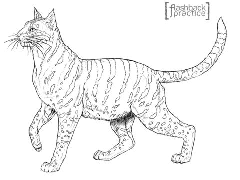 Gato Montes Para Colorear
