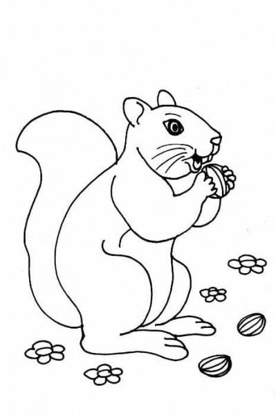 Tiernos Animales Terrestres Para Dibujar Para Tus Niños