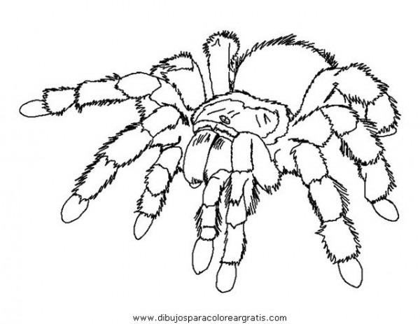 Dibujo Aranas_07 En La Categoria Animales Diseños