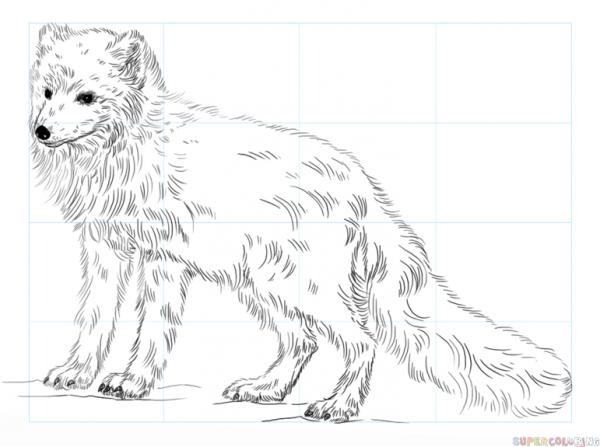 Cómo Dibujar Un Zorro Polar