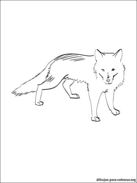 Zorro ártico Dibujo Para Colorear