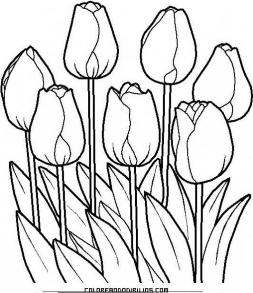 Coloridos Tulipanes