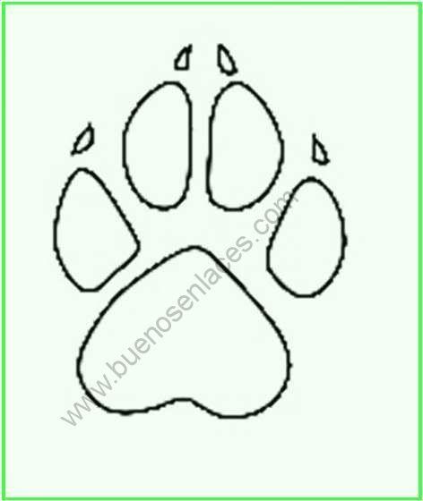 Resultado De Imagen Para Imagenes De Garras De Animales Para