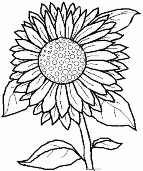 Dibujos De Girasoles A Lápiz