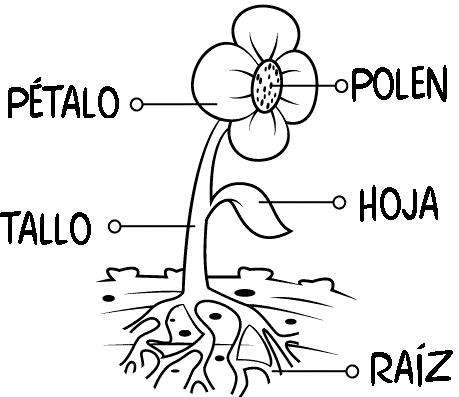 Dibujo De Las Partes De Una Flor