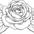 Imagenes Para Colorear Rosas