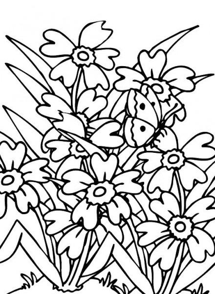 Flores Silvestres Para Colorear