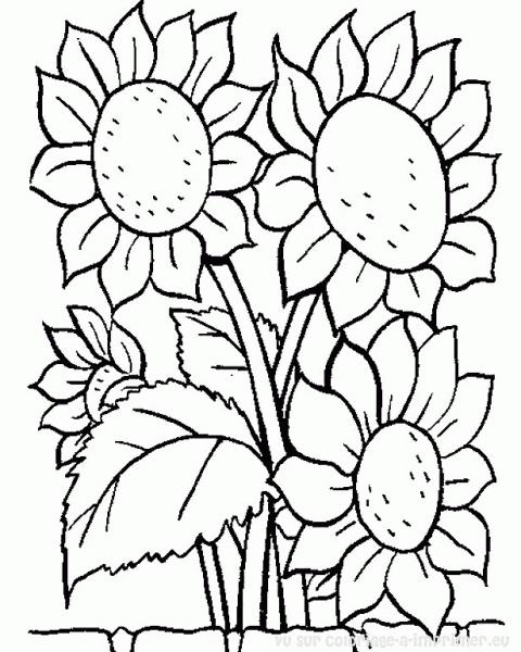 Flores  33 (naturaleza) – Páginas Para Colorear