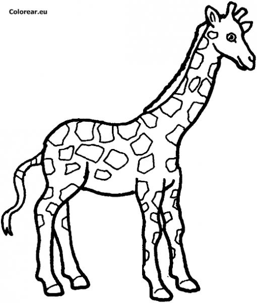 Jirafa  32 (animales) – Páginas Para Colorear