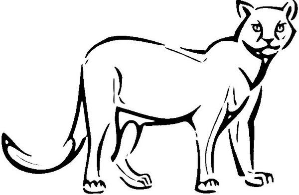 Puma  13 (animales) – Páginas Para Colorear