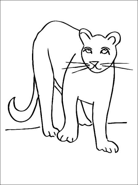 Puma  3 (animales) – Páginas Para Colorear