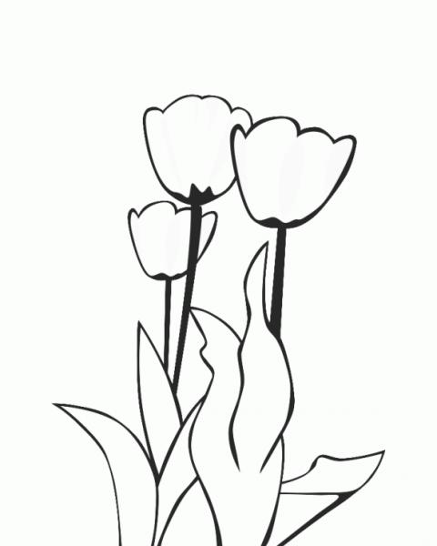 Tulipán  90 (naturaleza) – Páginas Para Colorear
