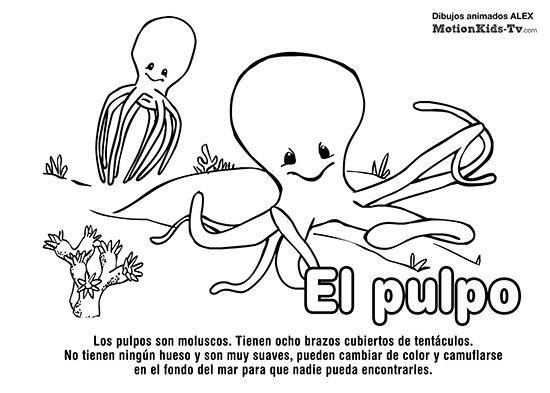 Pulpo, Pintas Animales Del Mar, Dibujos Colorear