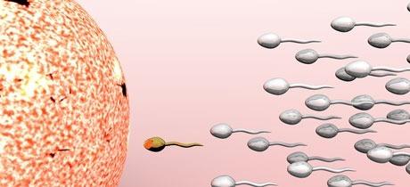 Ovulo Y Espermatozoide Para Colorear