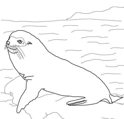 Dibujo De Lobo Peletero De Las Galápagos Para Colorear