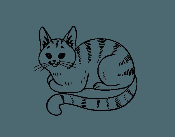 Dibujo De Gato Joven Para Colorear