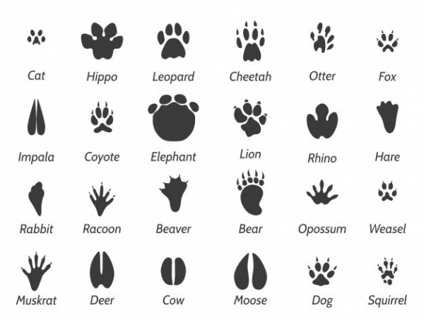 Huellas Animales
