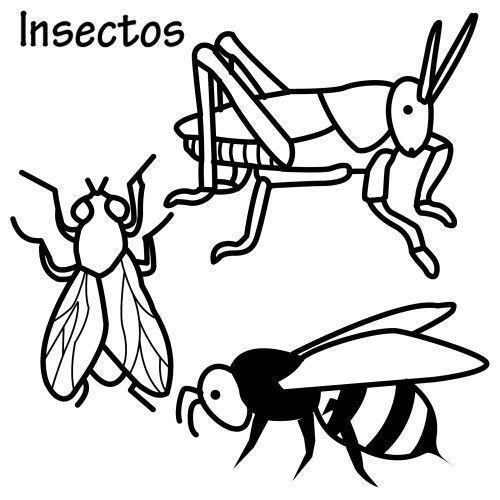 Dibujos De Insectos Para Colorear