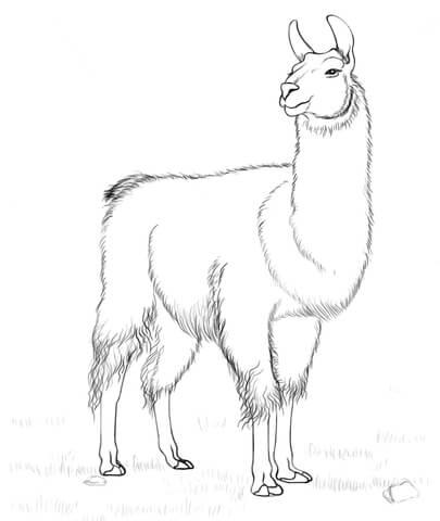 Dibujo De Llama Para Colorear