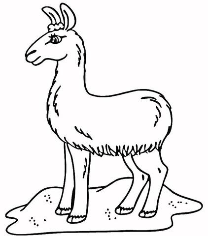 Dibujo De Llama En Los Prados Para Colorear