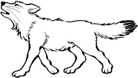 Lobo  Imagenes Para Colorear