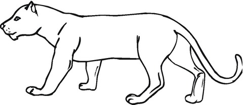 Dibujo De Dibujo De Un Puma Para Colorear