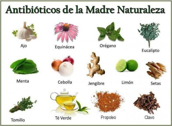 50 Plantas Medicinales, Para Cultivar Y Para Qué Sirven
