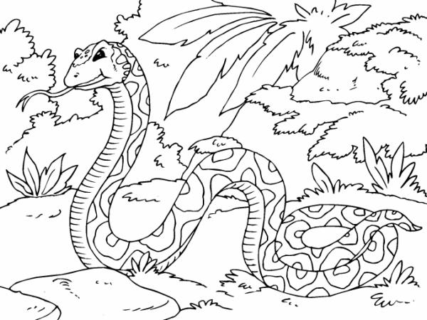 Serpiente En La Selva Para Imprimir