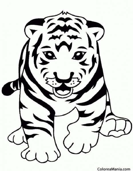 Colorear Tigre De Frente (animales De La Selva), Dibujo Para