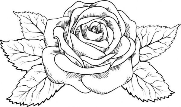 Dibujos De Flores Para Imprimir Y Pintar