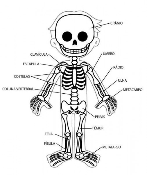 Imágenes Del Esqueleto Humano Para Niños