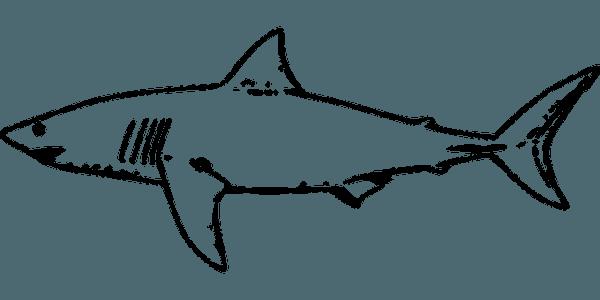 Tiburón, Peces, Gran Tiburón Blanco