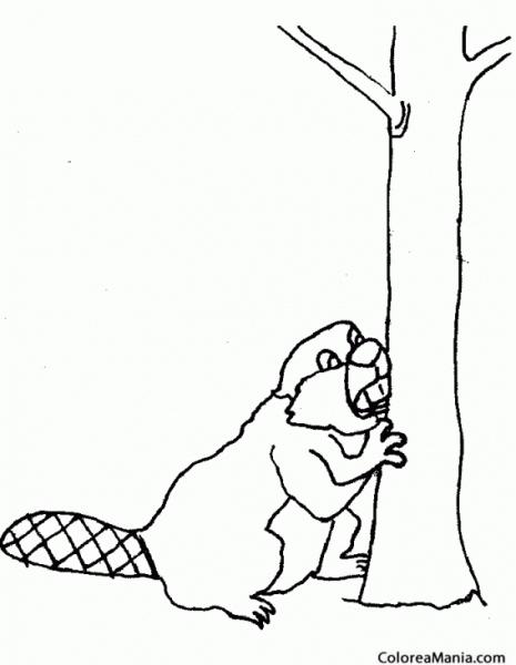 Colorear Castor Royendo Tronco árbol (animales Del Bosque), Dibujo