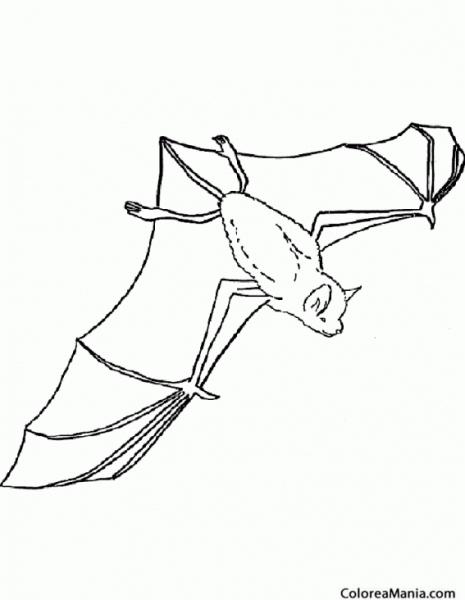 Colorear Murciélago Vista Aérea (animales Del Bosque), Dibujo Para
