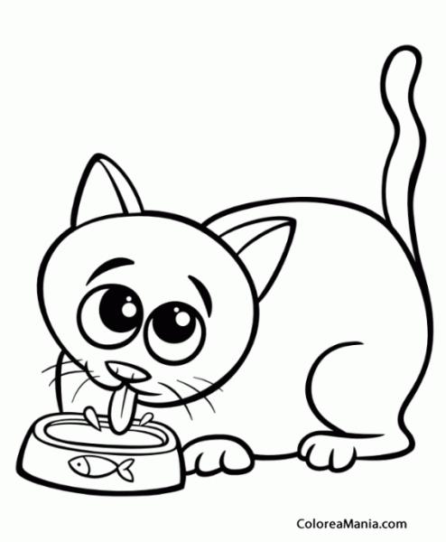 Colorear Gato Bebiendo Agua (animales Domésticos), Dibujo Para