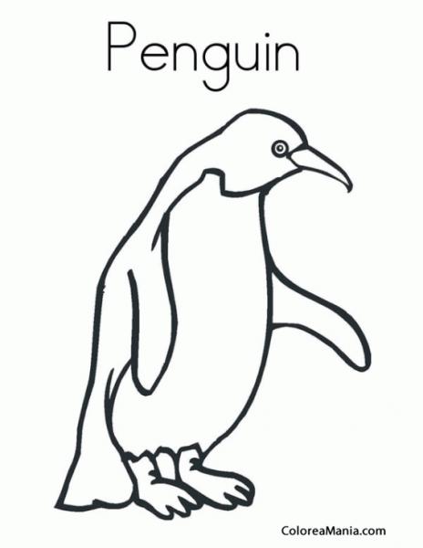 Colorear Pingüino De Humboldt  Spheniscus Humboldti (animales