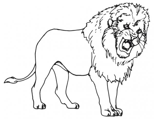 Dibujos De Animales Salvajes Para Imprimir Y Colorear