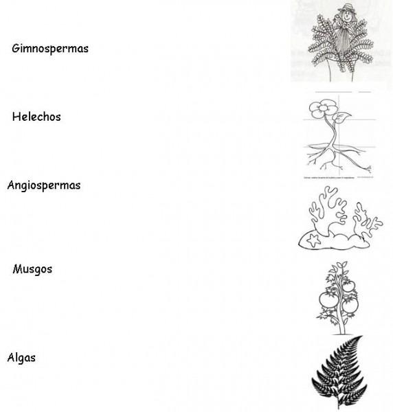√ Plantas De Musgos Para Colorear