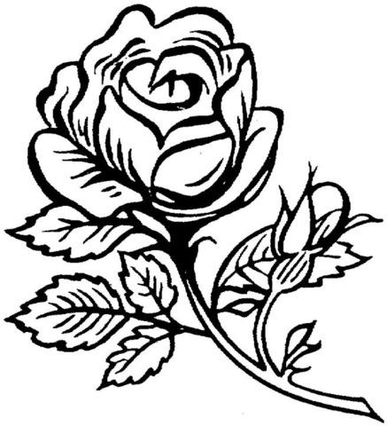 Dibujo De Rosa Grande Y Bonita Para Colorear
