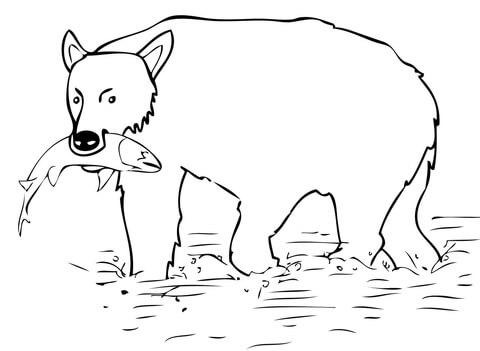 Dibujo De El Oso Pardo Cazó Un Salmón Para Colorear
