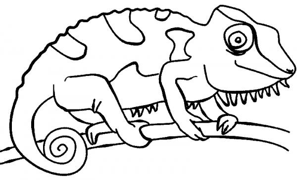 La Chachipedia  Dibujos De Camaleones Para Colorear, Para Imprimir