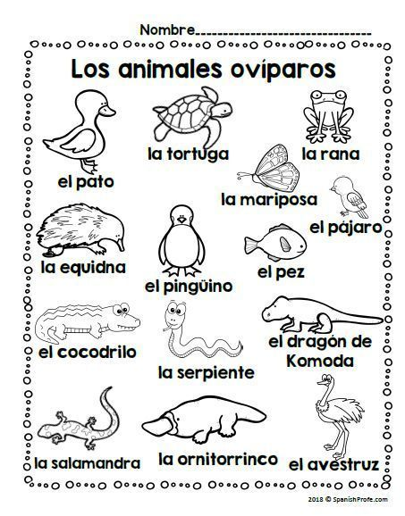Los Animales Oviparos (oviparous Animals In Spanish