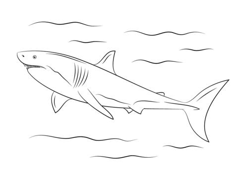 Dibujo De Gran Tiburón Blanco Para Colorear