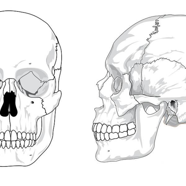 Cuáles Son Los Nombres De Los Huesos De La Cabeza Humana