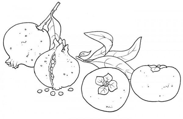 Dibujo De Una Granada Fruta Para Colorear