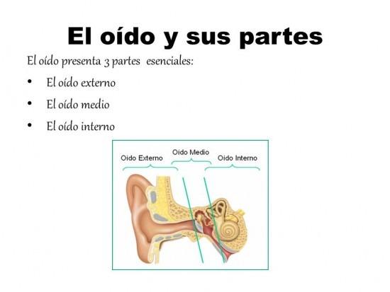 Imágenes Del Oído Humano  Estructura, Partes Y Nombres