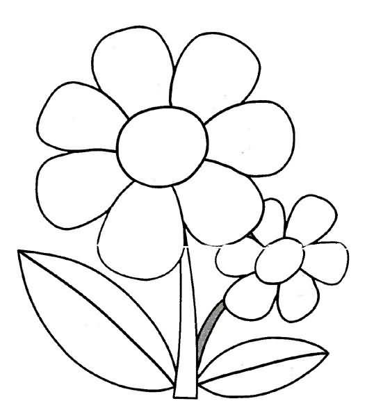 Margarita En Flor